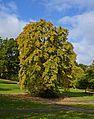 Devonshire Park 3 (4030091938).jpg