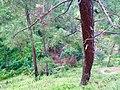 Dhukane, Uttarakhand 263135, India - panoramio.jpg