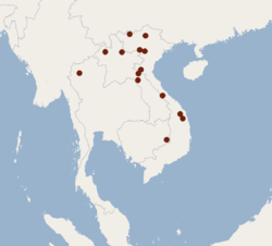 Distribution of Murina annamitica.png