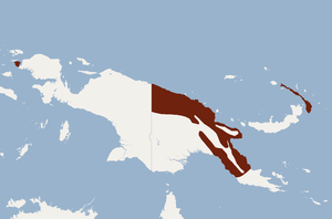 Distribution of Nyctophilus microtis.png