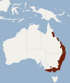 Distribution of Pteropus poliocephalus.png