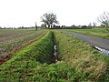 Ditch beside Morley Lane - geograph.org.uk - 1610765.jpg