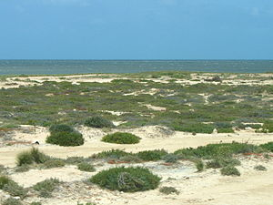Djerba south-coast-3.jpg