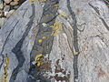 Dolerite Dykes in Migmatitic Gneiss Kosterhavet Sweden 2.jpg
