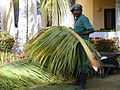 Dominican resort garden worker.jpg