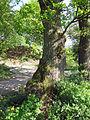 Drei Eichen bei Elfershausen.jpg