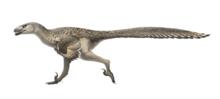 Dromaeosaurus Restoration.png