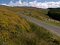 Druidale Road. Isle of Man. - geograph.org.uk - 40436.jpg