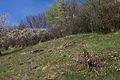 Duben vysenske kopce 07.jpg