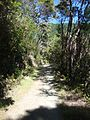 Dun Mountain Trail 10.JPG