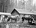 EG Englesh logging camp near Arlington, Washington, August 3, 1898 (INDOCC 261).jpg