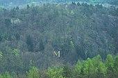 Goldenes Namens-M zur Begrüßung, im nach ihr benannten Mariental südlich von Eisenach (Quelle: Wikimedia)