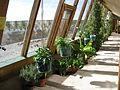 Earthship inside greenhouse.JPG