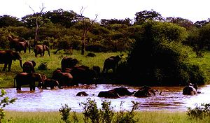 Hwange National Park - Elephant at Longone Pan