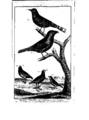 Encyclopedie volume 5-070.png