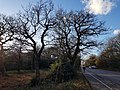 Epping Forest 20180125 150145 (49374723212).jpg