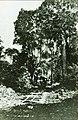 Estrada de ferro da fazenda de Henrique Dumont, próximo de Ribeirão Preto - 1-13836-0000-0000, Acervo do Museu Paulista da USP.jpg
