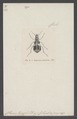 Euproctus - Print - Iconographia Zoologica - Special Collections University of Amsterdam - UBAINV0274 010 09 0005.tif