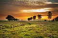 Evening in a pasture.jpg