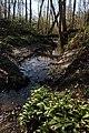 Everbeekse bossen 53.jpg