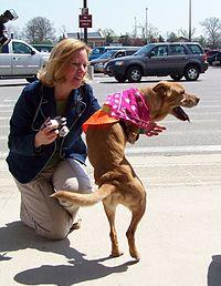 Faith the biped dog (2422125130) (3).jpg