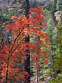 Fall Colors in West Fork - 2010 (5179028948).jpg