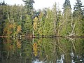 Fall Colors reflected on Bay near Nelson Park - panoramio.jpg