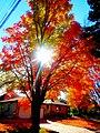 Fall Foliage in Madison - panoramio (6).jpg