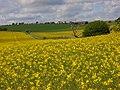 Farmland, Collingbourne Ducis - geograph.org.uk - 426477.jpg