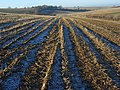 Farmland, Ewelme - geograph.org.uk - 1082231.jpg