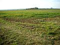 Farmland - geograph.org.uk - 140828.jpg