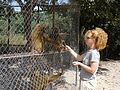 Feeding the baboons (316661932).jpg