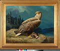 Ferdinand von Wright - Old White-Tailed Sea Eagle - A-2002-615 - Finnish National Gallery.jpg