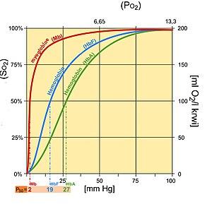 Oxygen–hemoglobin dissociation curve - Fetal hemoglobin saturation curve