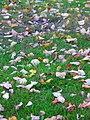 Feuilles mortes sur le sol.jpg
