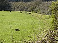Field by the Cycle Path - geograph.org.uk - 397492.jpg