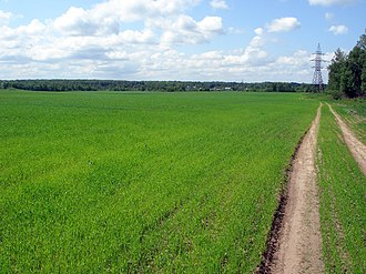 Agriculture in Russia - Young wheat just coming up in June in a field near Nizhny Novgorod