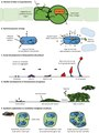 Figure 2 - Examples of social behavior in microbes.pdf