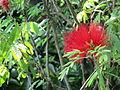 Fiore rosso.JPG