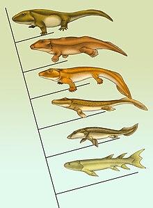 Landgang Evolution