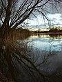 Fishing ponds, Newport - geograph.org.uk - 745256.jpg