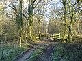 Flaxlands Wood - geograph.org.uk - 332206.jpg