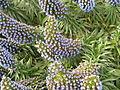 Flickr - brewbooks - Birkenhead garden.jpg