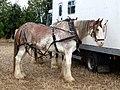 Flintham Ploughing Match, Newton - geograph.org.uk - 568625.jpg