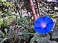 Flor do cerrado - panoramio.jpg