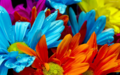 Flores de clores.png