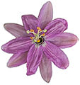 Flower (6613412933).jpg