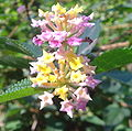 Flower crop2 dsc07583.jpg