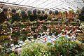 Flower spring (215065301).jpg