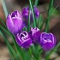 Flowers (24542679053).jpg